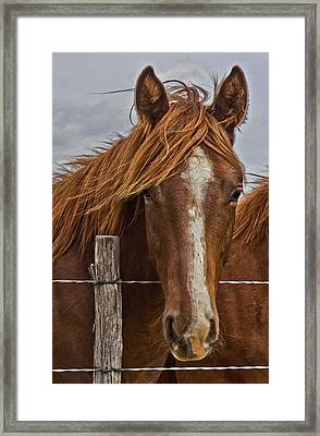 Fine Filly Framed Print by Mamie Thornbrue