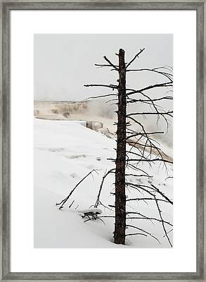Fine Place For A Dead Tree Framed Print