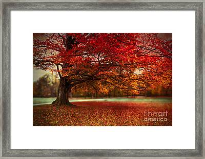 Finest Fall Framed Print by Hannes Cmarits