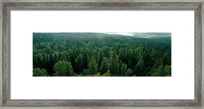 Finland, Aulanko, Scandinavian Forest Framed Print by Panoramic Images