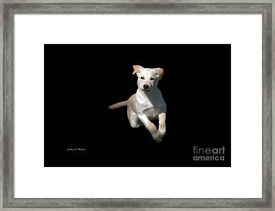 Finn  Framed Print by Jonathan E Whichard