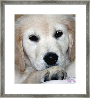 Fiona The English Cream Framed Print