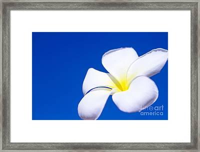 Fiore Nel Cielo - The Blue Dream Of Sky Framed Print by Sharon Mau