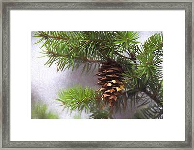 Fir Cone Digital Painting Framed Print by Sharon Talson