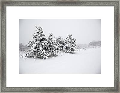 Fir Trees Covered By Snow Framed Print