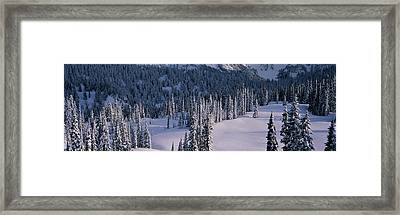 Fir Trees, Mount Rainier National Park Framed Print by Panoramic Images