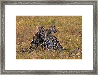 Fire And Ice Framed Print by Ashley Vincent
