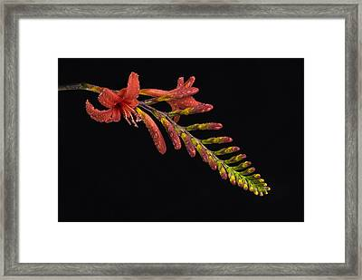 Framed Print featuring the photograph Fire And Water by Trevor Chriss