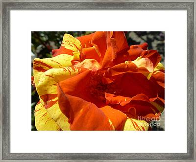 Fire Ball Framed Print by Anat Gerards