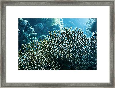 Fire Coral Framed Print