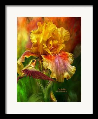 Bearded Irises Framed Prints