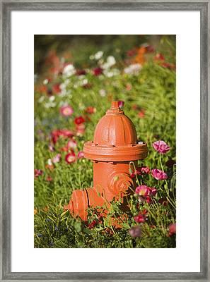 Fire Hydrant & Flowers Kodiak Island Framed Print by Kevin Smith