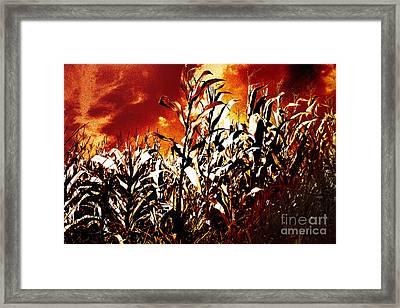 Fire In The Corn Field Framed Print