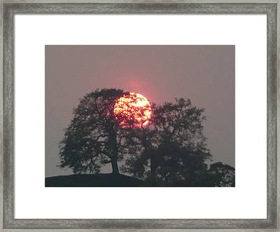 Fire In The Trees Framed Print