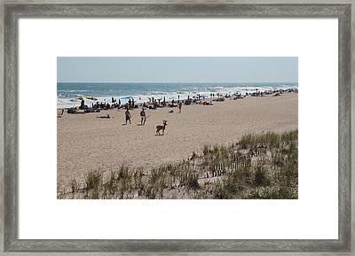 Fire Island Beach With Deer Framed Print