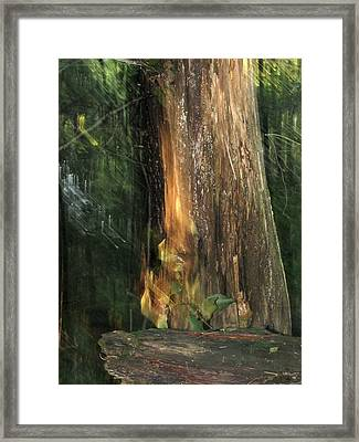 Framed Print featuring the photograph Fire Leaf by Melissa Stoudt