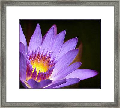 Fire Lilly Framed Print