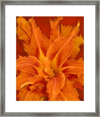 Fire Lily Framed Print