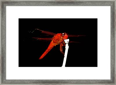 Framed Print featuring the photograph Fire Red Dragon by Peggy Franz