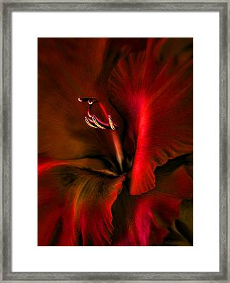 Fire Red Gladiola Flower Framed Print by Jennie Marie Schell
