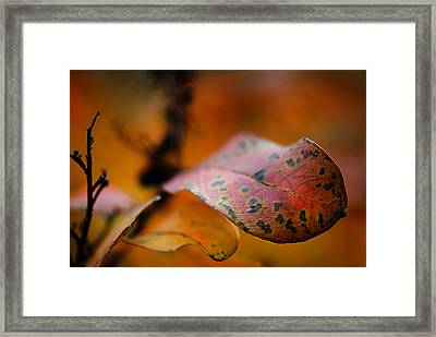 Fire Framed Print by Sarah Coppola