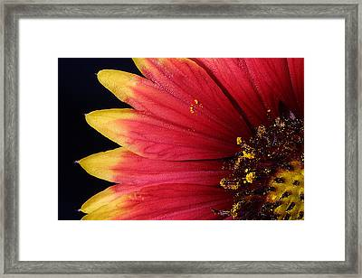 Framed Print featuring the photograph Fire Spokes by Paul Rebmann