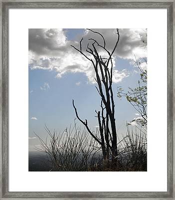 Victim Of 2010  Framed Print by Gilbert Artiaga