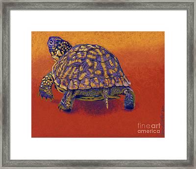 Fire Walker - Box Turtle Framed Print