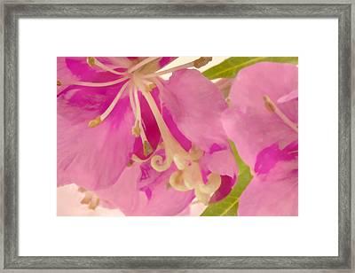 Fire Weed Macro Digital Watercolor Framed Print
