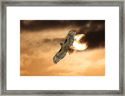 Framed Print featuring the photograph Firebird by Jim Garrison