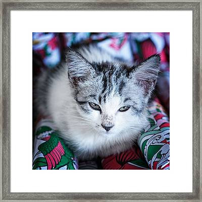 Firecracker Kitten Framed Print by Zoe Ferrie