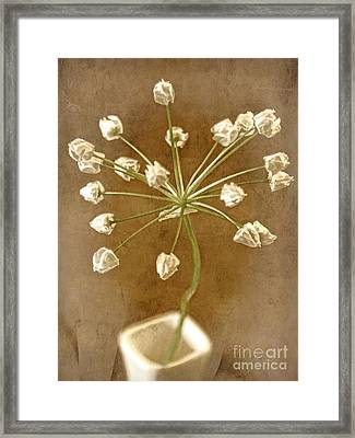 Firecracker Framed Print by Peggy Hughes