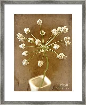 Firecracker Framed Print
