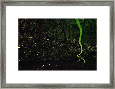 Fireflies Flash And Streak Framed Print by David Liittschwager