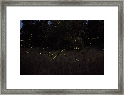 Firefly Traces On A Summer Night Framed Print