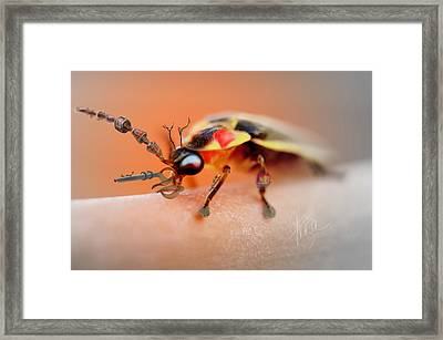 Framed Print featuring the photograph Firefly Warrior by Chris Fraser