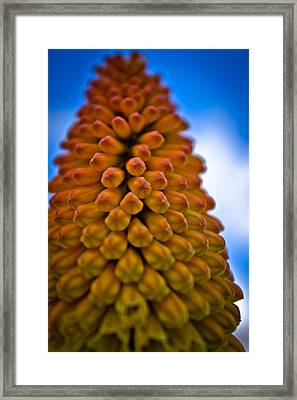 Framed Print featuring the photograph Firepoker by Joel Loftus