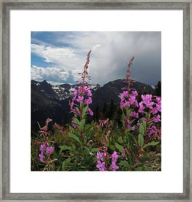 Fireweed And Hayden Spire Framed Print by Heather Coen