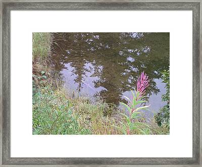 Fireweed And Salmon. Framed Print
