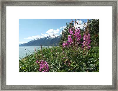 Fireweed At Yakutania Point Framed Print