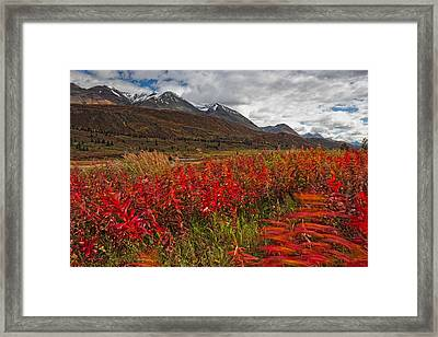 Fireweed Blowing In The Wind Along The Framed Print by Robert Postma