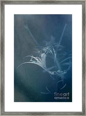 Fireweed Blues Framed Print by Liz  Alderdice