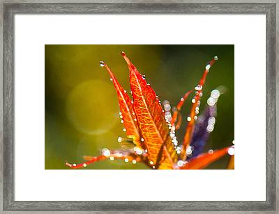 Fireweed Framed Print