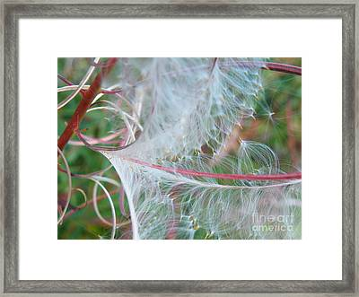 Fireweed Number One Framed Print