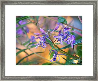Fireweed Number Three Framed Print