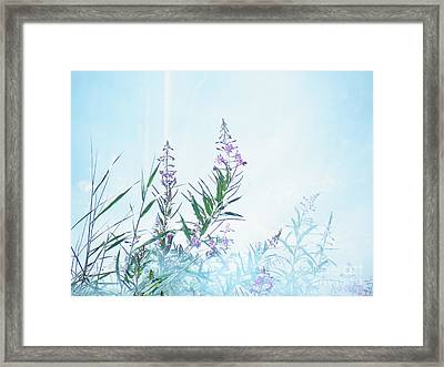 Fireweed Number Two Framed Print