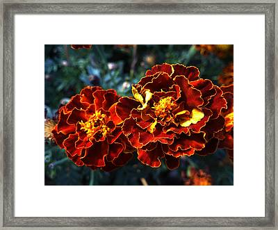 Firework Framed Print by Lucy D