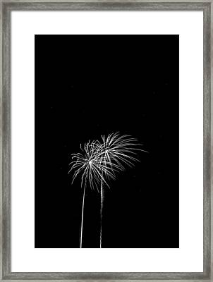 Firework Palm Trees Framed Print by Darryl Dalton