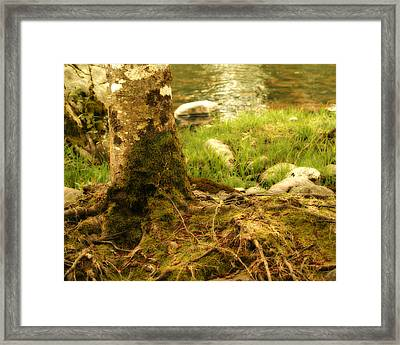 Firmly Rooted Framed Print by Bonnie Bruno