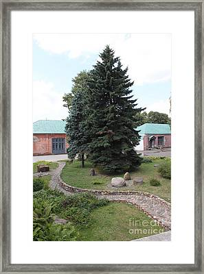 Firs And Stones Framed Print